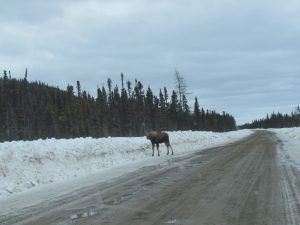 Surviving the Trans Labrador Highway in winter 21